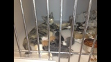 Alleged pet hoarder gives up nearly 200 cats… - (1/3)