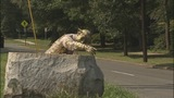 PHOTOS: Historic Myers Park statue knocked down - (1/8)