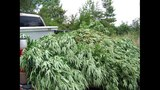 SLIDESHOW: Pot plants found in York County - (3/3)