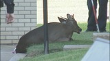 Deer causes traffic backups on John Belk Freeway - (11/11)