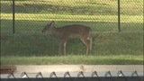 Deer causes traffic backups on John Belk Freeway - (7/11)