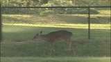 Deer causes traffic backups on John Belk Freeway - (6/11)