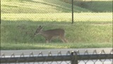 Deer causes traffic backups on John Belk Freeway - (8/11)