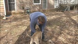 Couple says dog alerted them to house fire - (7/7)