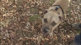 Couple says dog alerted them to house fire - (2/7)