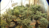 Marijuana_2929767