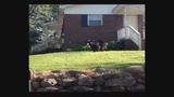 Black bear spotted in Concord - (3/5)