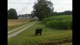 Marshville bear_3579586