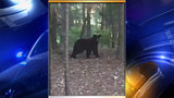 IMAGES: Bear spotted in Anson County - (1/3)