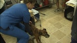 IMAGES: 10 emaciated dogs rescued from home,… - (9/10)