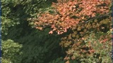 IMAGES: High hopes for fall leaf season in mountains - (6/6)