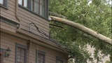 IMAGES: Massive tree falls onto home in west… - (4/8)