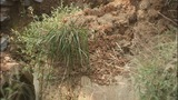 IMAGES: Action 9: Erosion problems for… - (4/8)