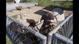 SC Puppy Mill - (8/9)