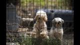 SC Puppy Mill - (9/9)