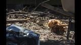 SC Puppy Mill - (3/9)
