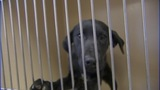 IMAGES: Lincoln Co. animal shelter to adopt… - (6/10)