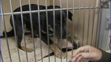 IMAGES: Lincoln Co. animal shelter to adopt… - (8/10)