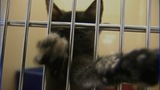 IMAGES: Lincoln Co. animal shelter to adopt… - (7/10)