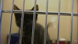 IMAGES: Lincoln Co. animal shelter to adopt… - (10/10)