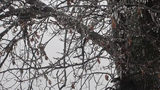 IMAGES: Winter weather across the Carolinas Tuesday - (4/11)