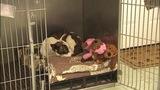 IMAGES: Dog found shot in head, hog tied - (1/4)