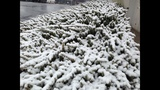 IMAGES: Snow falling in Charlotte Tuesday - (15/25)