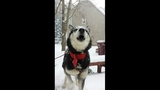 VIEWER IMAGES VOL. 9: Pets in the snow - (24/25)