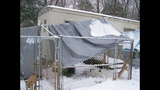 IMAGES: Dog shelter destroyed by snow, ice - (6/7)