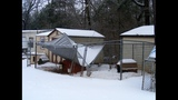 IMAGES: Dog shelter destroyed by snow, ice - (2/7)