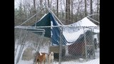IMAGES: Dog shelter destroyed by snow, ice - (3/7)