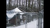 IMAGES: Dog shelter destroyed by snow, ice - (4/7)
