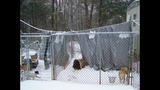 IMAGES: Dog shelter destroyed by snow, ice - (7/7)