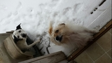 VIEWER IMAGES VOL. 9: Pets in the snow - (21/25)