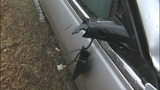 IMAGES: Tree hits car while man driving - (4/9)