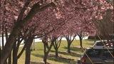Has allergy season started too soon? - (5/5)