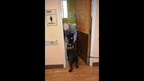 IMAGES: K9 officer Storm at the Salisbury VA - (2/5)