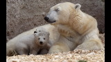IMAGES: Munich Zoo presents twin polar bear cubs - (22/25)