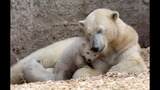 IMAGES: Munich Zoo presents twin polar bear cubs - (9/25)