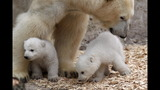 IMAGES: Munich Zoo presents twin polar bear cubs - (25/25)