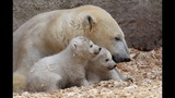 IMAGES: Munich Zoo presents twin polar bear cubs - (3/25)