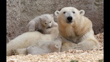 IMAGES: Munich Zoo presents twin polar bear cubs - (5/25)