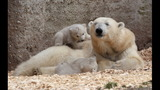 IMAGES: Munich Zoo presents twin polar bear cubs - (24/25)
