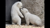 IMAGES: Munich Zoo presents twin polar bear cubs - (8/25)
