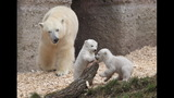 IMAGES: Munich Zoo presents twin polar bear cubs - (19/25)