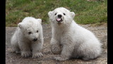 IMAGES: Munich Zoo presents twin polar bear cubs - (16/25)