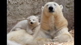 IMAGES: Munich Zoo presents twin polar bear cubs - (2/25)