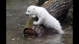 IMAGES: Munich Zoo presents twin polar bear cubs - (11/25)