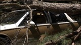 IMAGES: Weather partially to blame for uprooted trees - (5/8)