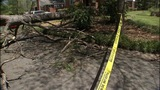IMAGES: Weather partially to blame for uprooted trees - (6/8)